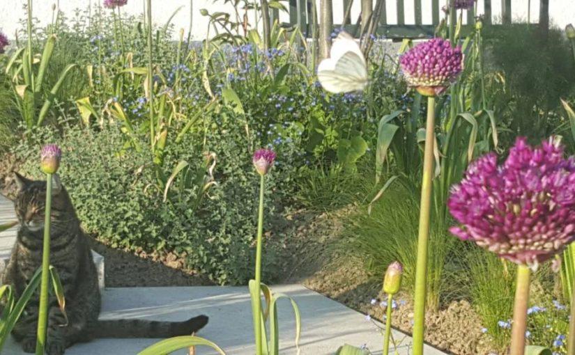 Weelderige beplanting in zuid Limburg