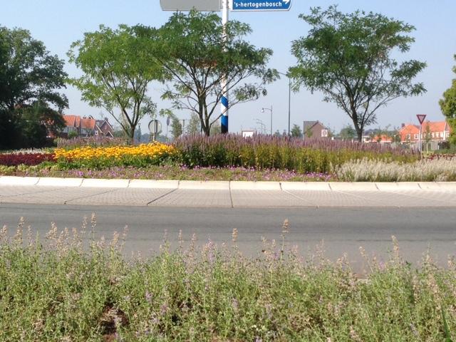 Beplanting Rotonde verhoogt biodiversiteit