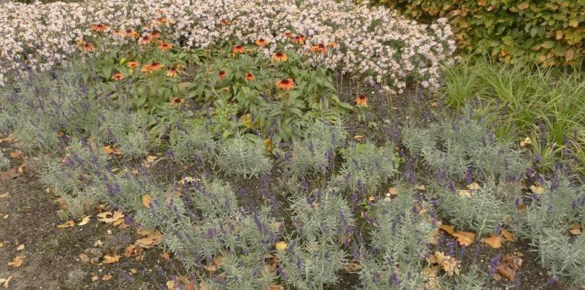 Beplantingsplan openbaar groen